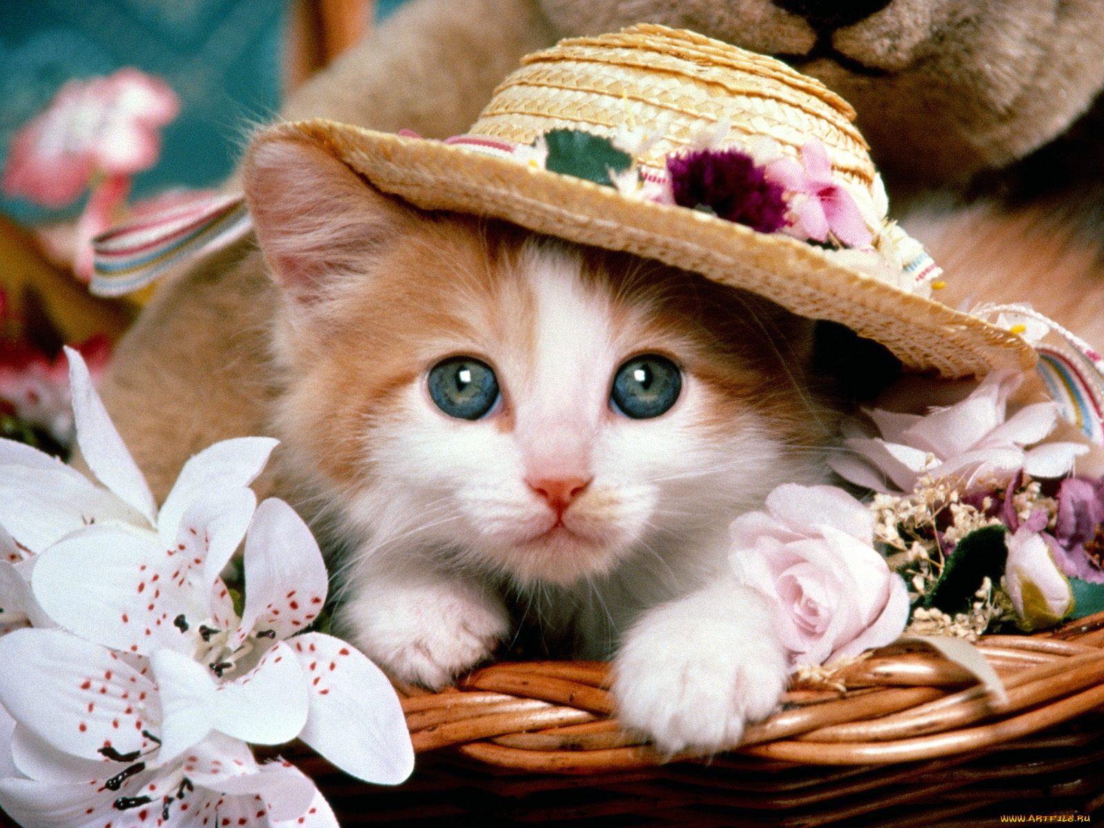 Красивые котики в картинках